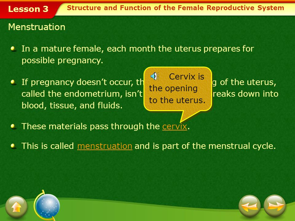 Structure and Function of the Female Reproductive System