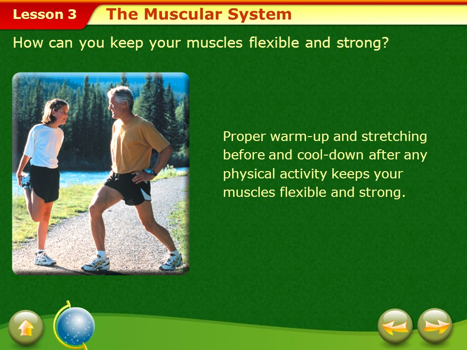 The Muscular System How can you keep your muscles flexible and strong