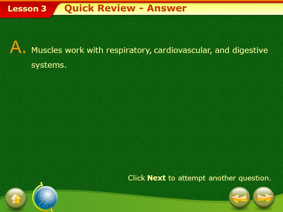 Quick Review - Answer A. Muscles work with respiratory, cardiovascular, and digestive systems.