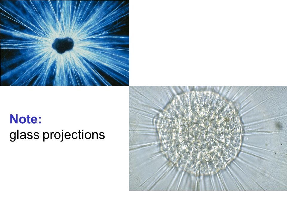 Note: glass projections