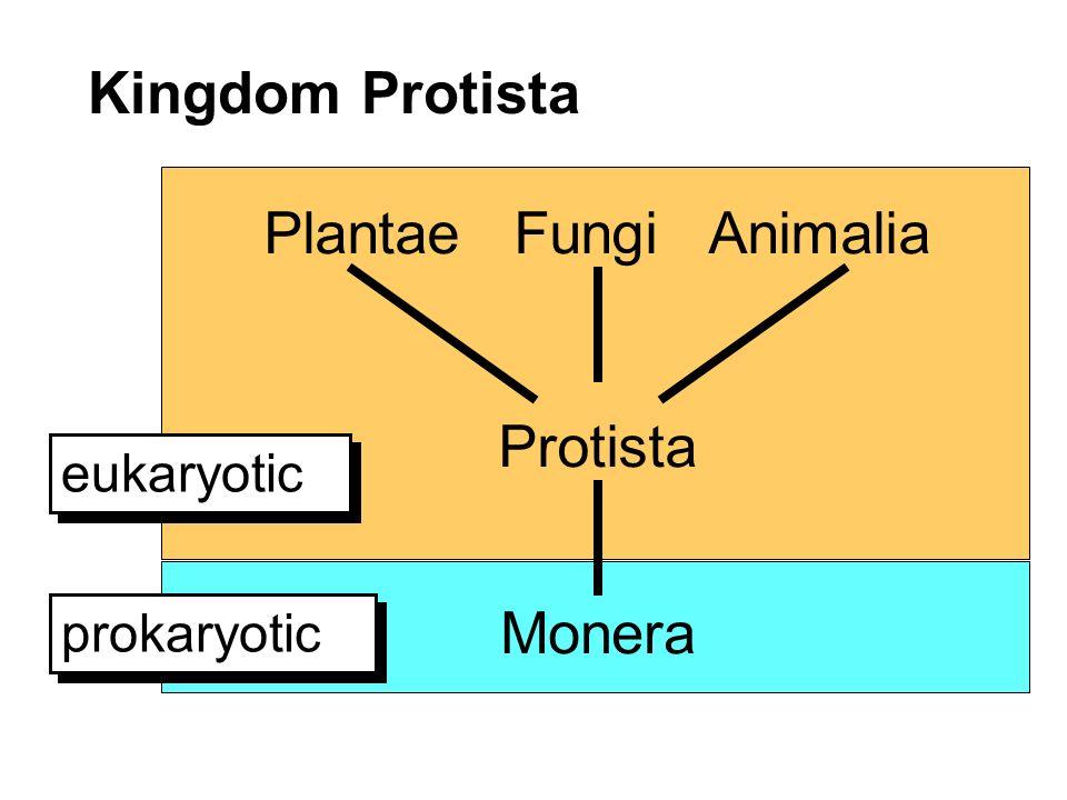 Plantae Fungi Animalia