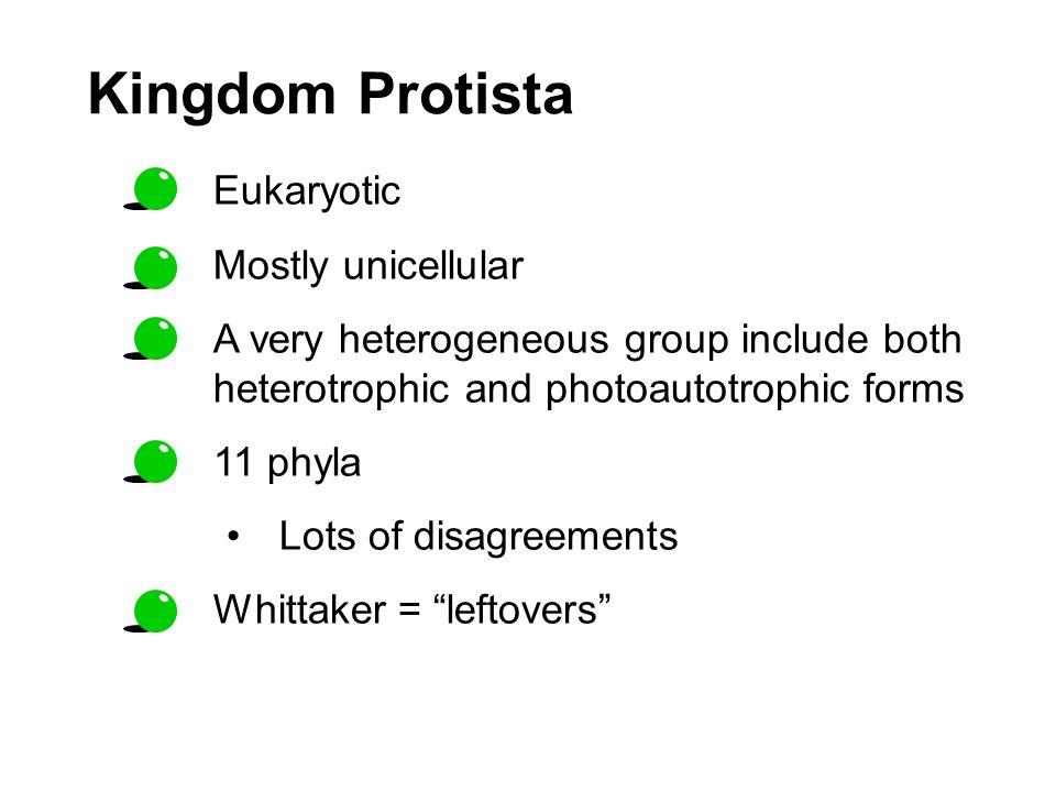 Kingdom Protista Eukaryotic Mostly unicellular