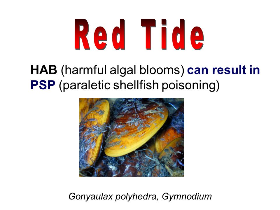 Red Tide HAB (harmful algal blooms) can result in
