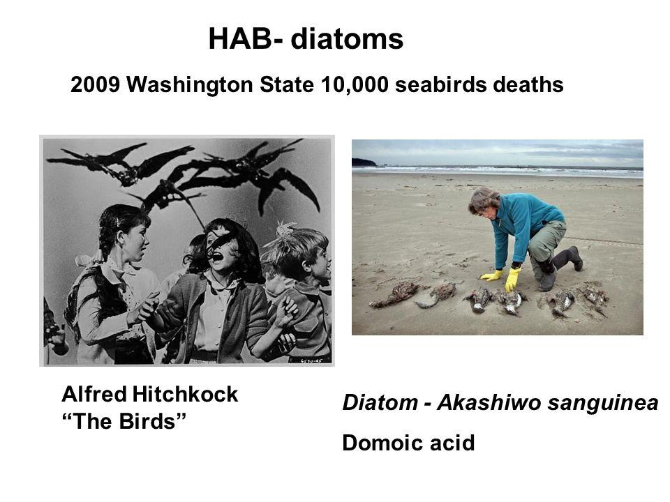 HAB- diatoms 2009 Washington State 10,000 seabirds deaths