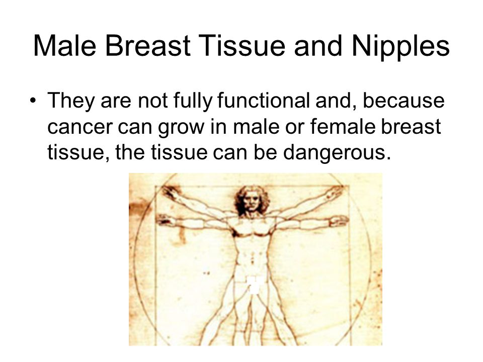 Male Breast Tissue and Nipples
