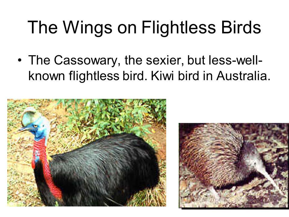 The Wings on Flightless Birds