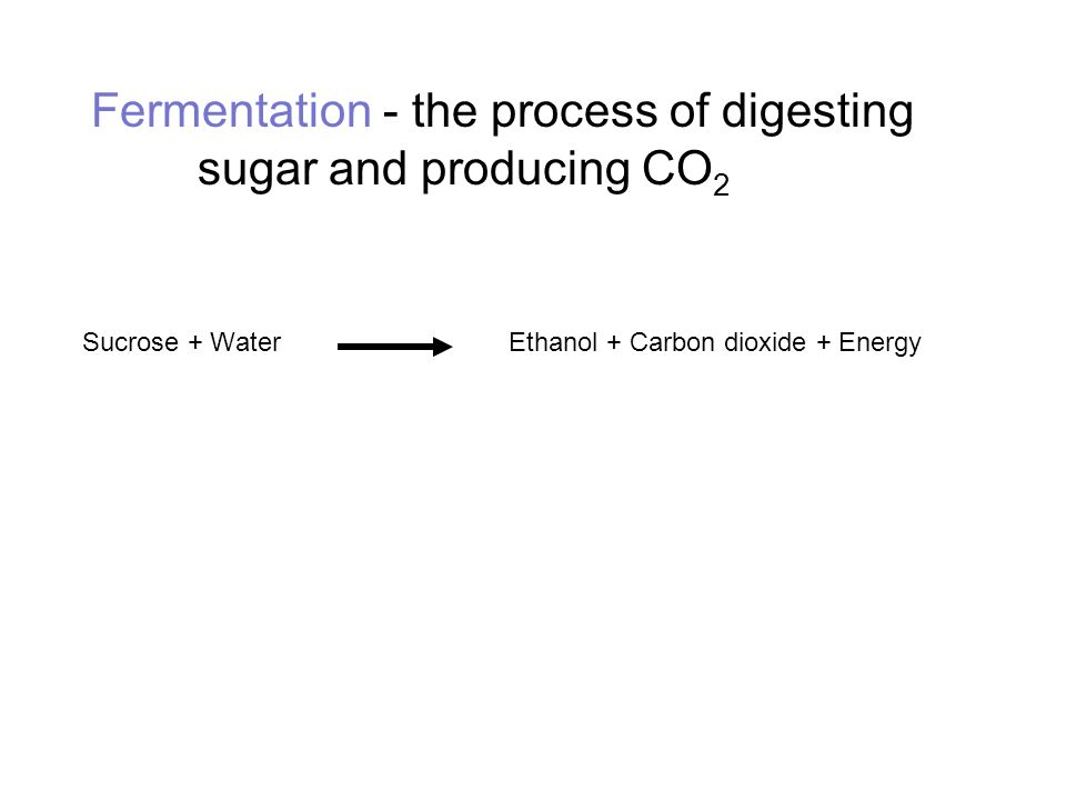Fermentation - the process of digesting sugar and producing CO2