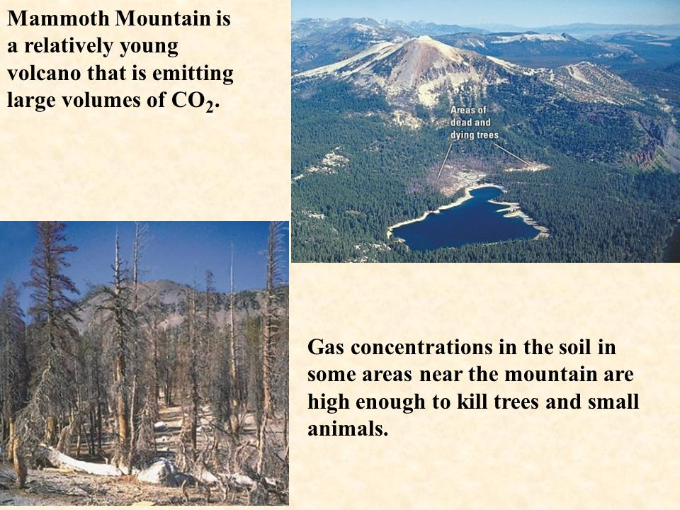 Mammoth Mountain is a relatively young volcano that is emitting large volumes of CO2.