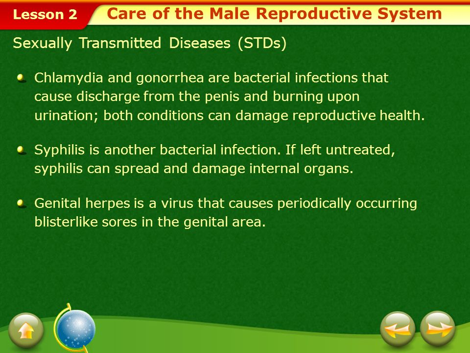 Care of the Male Reproductive System