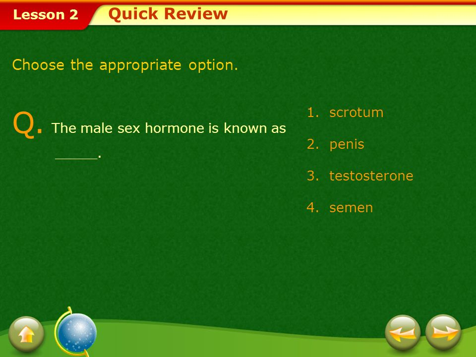Q. The male sex hormone is known as _____.