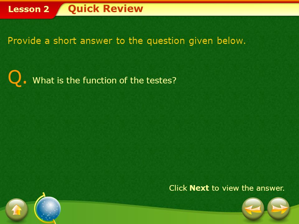 Q. What is the function of the testes