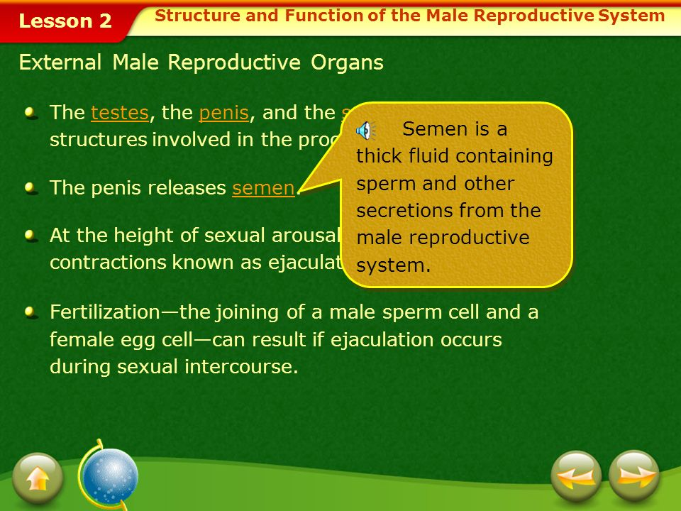 The Sperm causes contractions