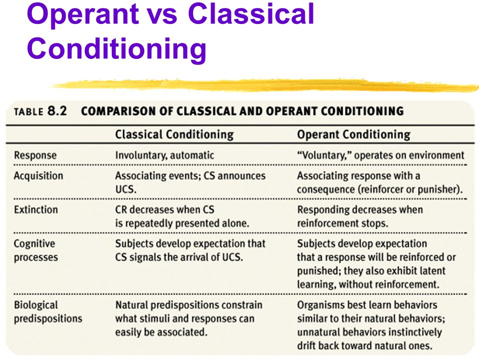 classical versus operant conditioning essay Classical vs operant conditioning operant conditioning (r s rf) • a voluntary response (r) is followed by a reinforcing stimulus (srf) • the voluntary response is more likely to be emitted by the organism.