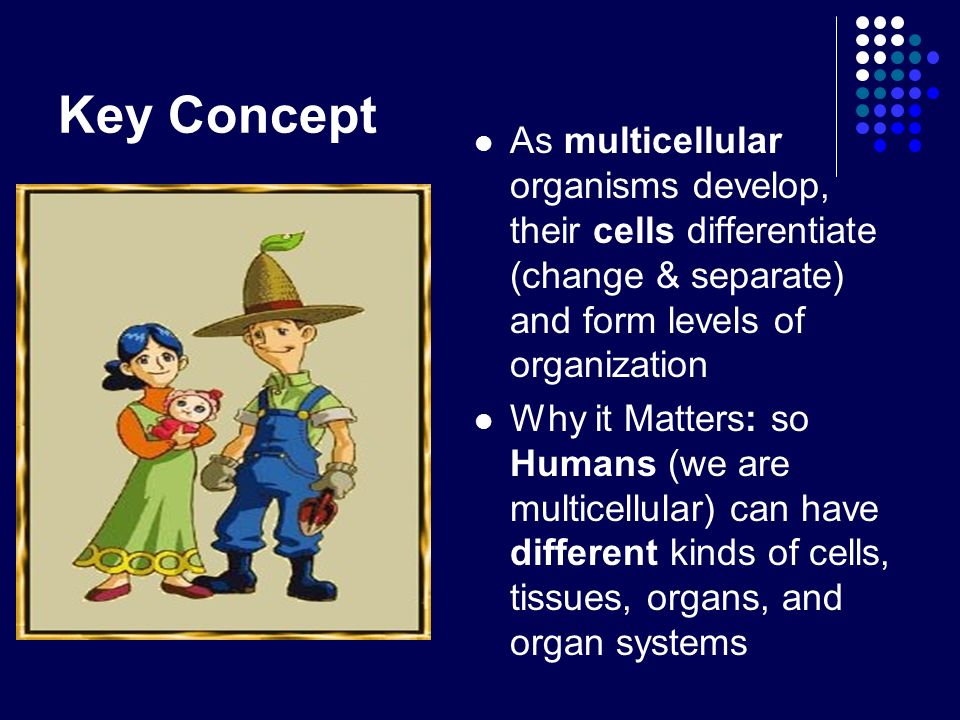 Key Concept As multicellular organisms develop, their cells differentiate (change & separate) and form levels of organization.