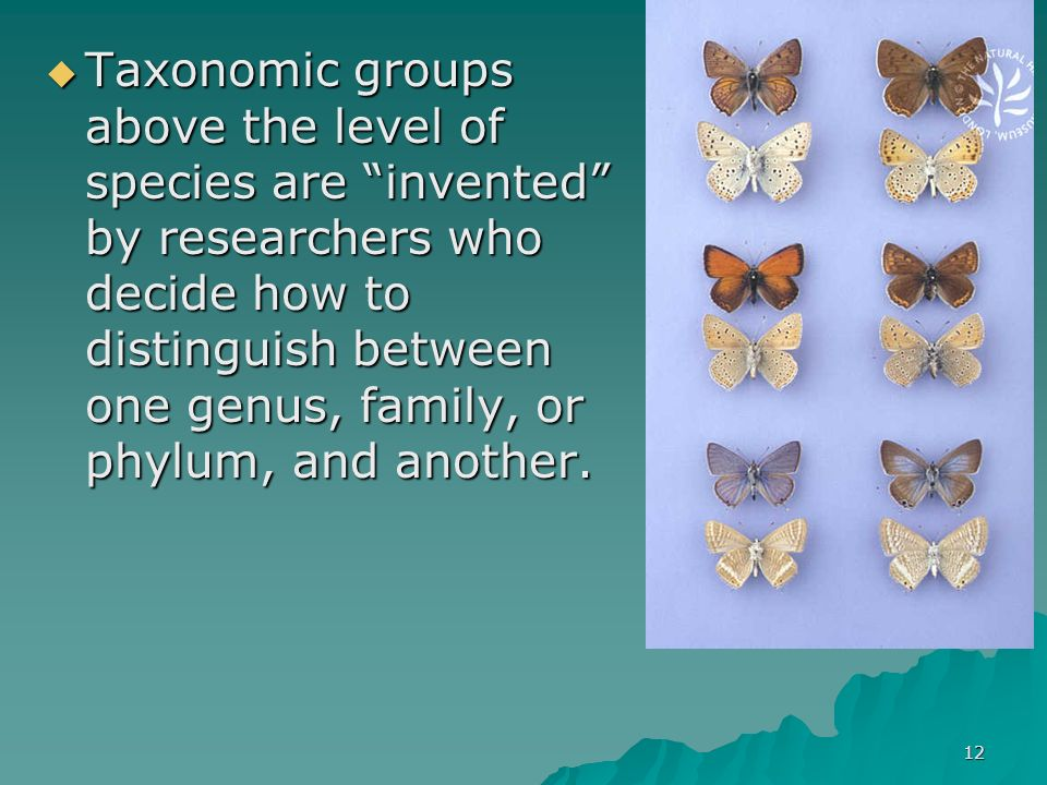 Taxonomic groups above the level of species are invented by researchers who decide how to distinguish between one genus, family, or phylum, and another.