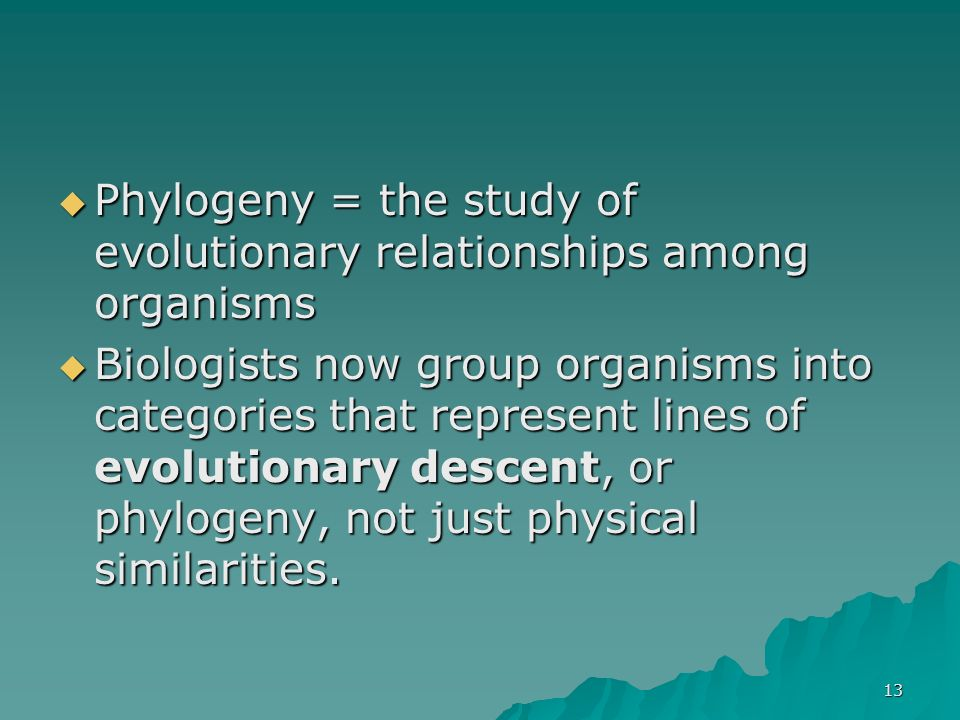 Phylogeny = the study of evolutionary relationships among organisms