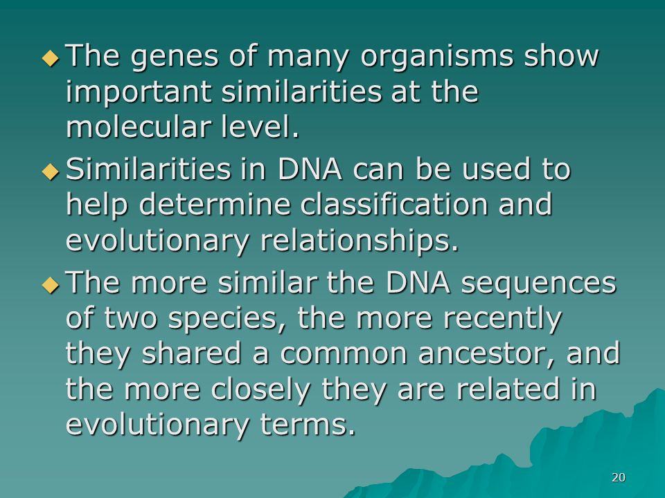 The genes of many organisms show important similarities at the molecular level.