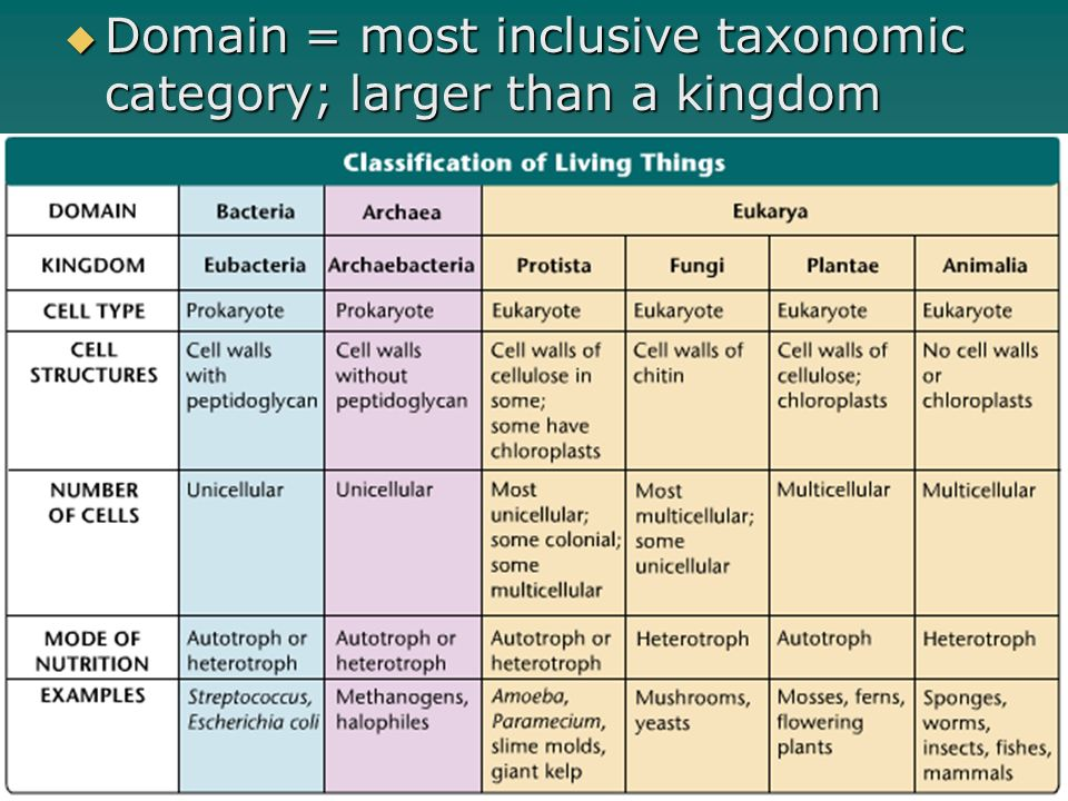 Domain = most inclusive taxonomic category; larger than a kingdom