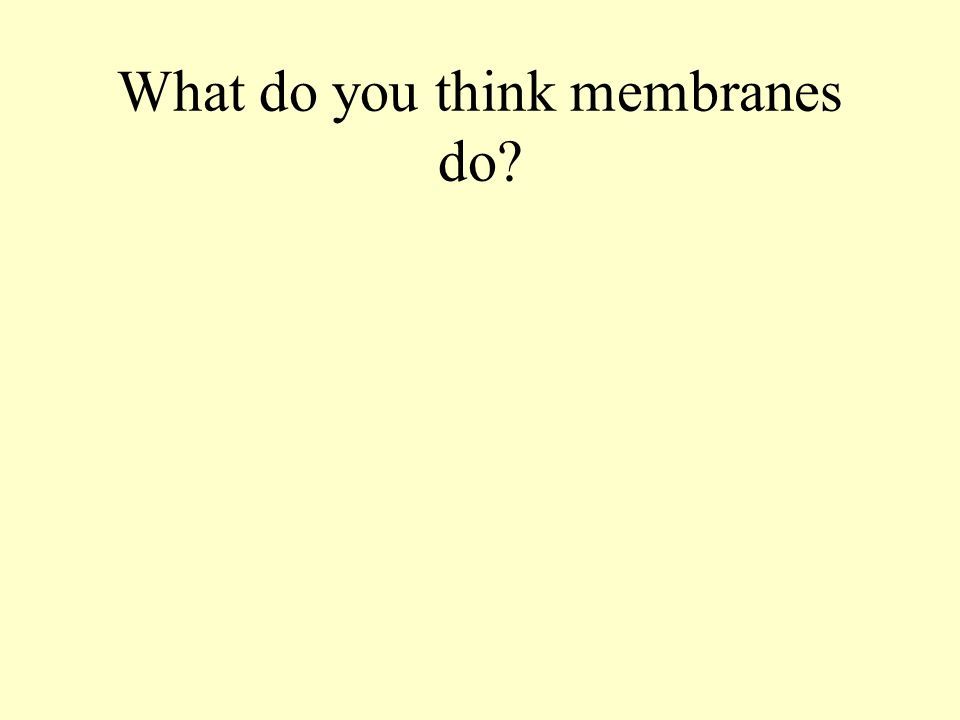 What do you think membranes do