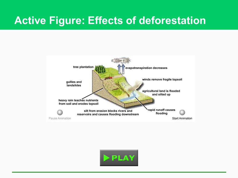 Active Figure: Effects of deforestation