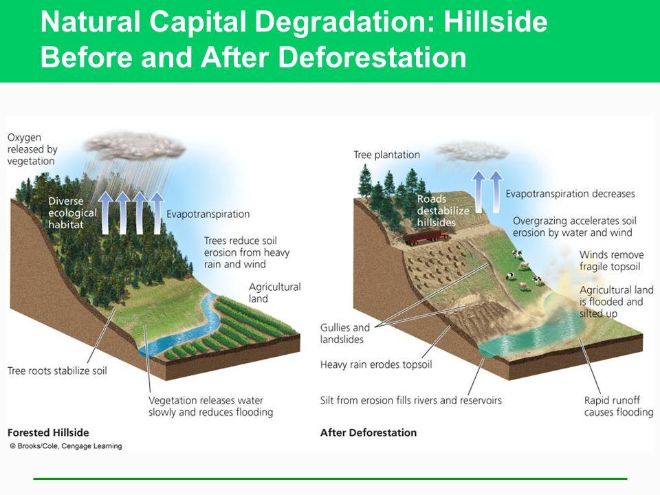 Natural Capital Degradation: Hillside Before and After Deforestation