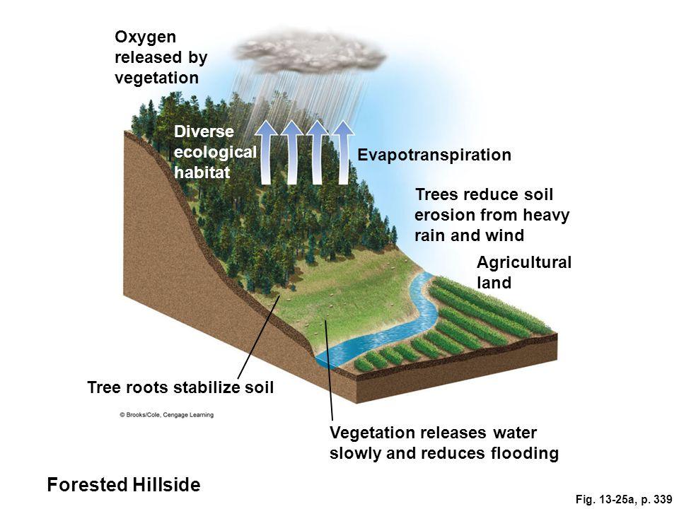 Forested Hillside Oxygen released by vegetation