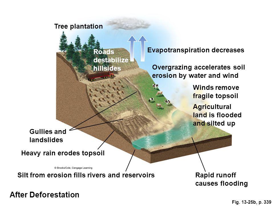 After Deforestation Tree plantation Evapotranspiration decreases