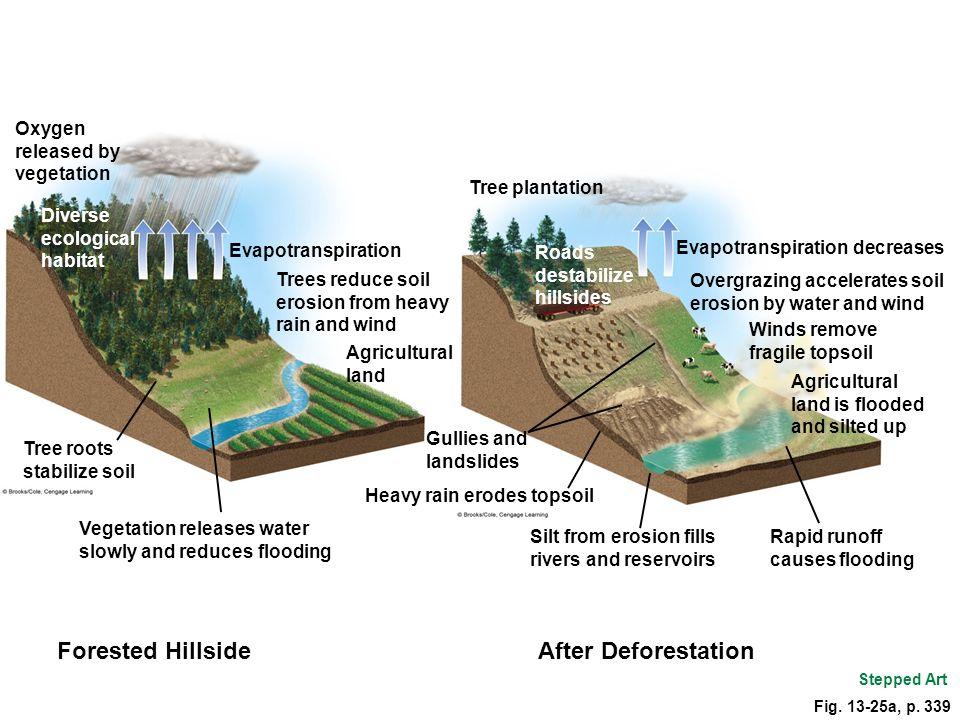 Forested Hillside After Deforestation Oxygen released by vegetation