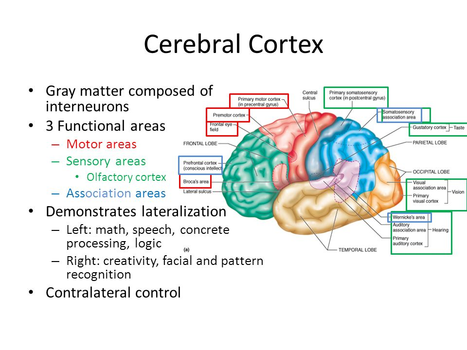 central nervous system ppt video online download