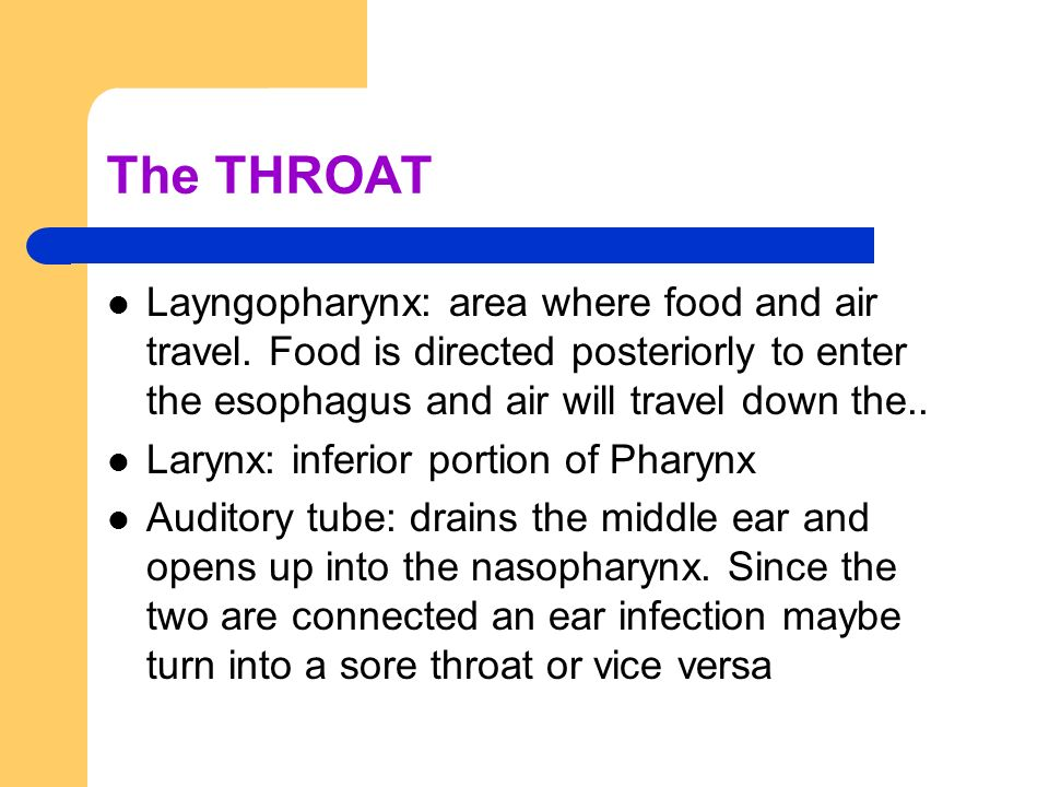 The THROAT Layngopharynx: area where food and air travel. Food is directed posteriorly to enter the esophagus and air will travel down the..