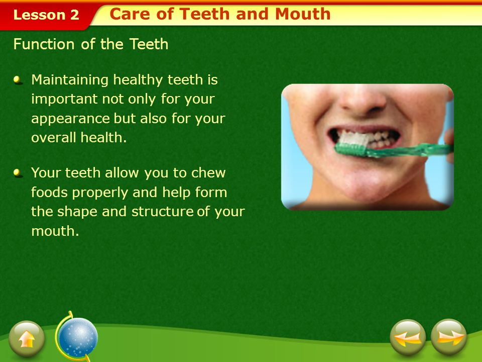 Care of Teeth and Mouth Function of the Teeth