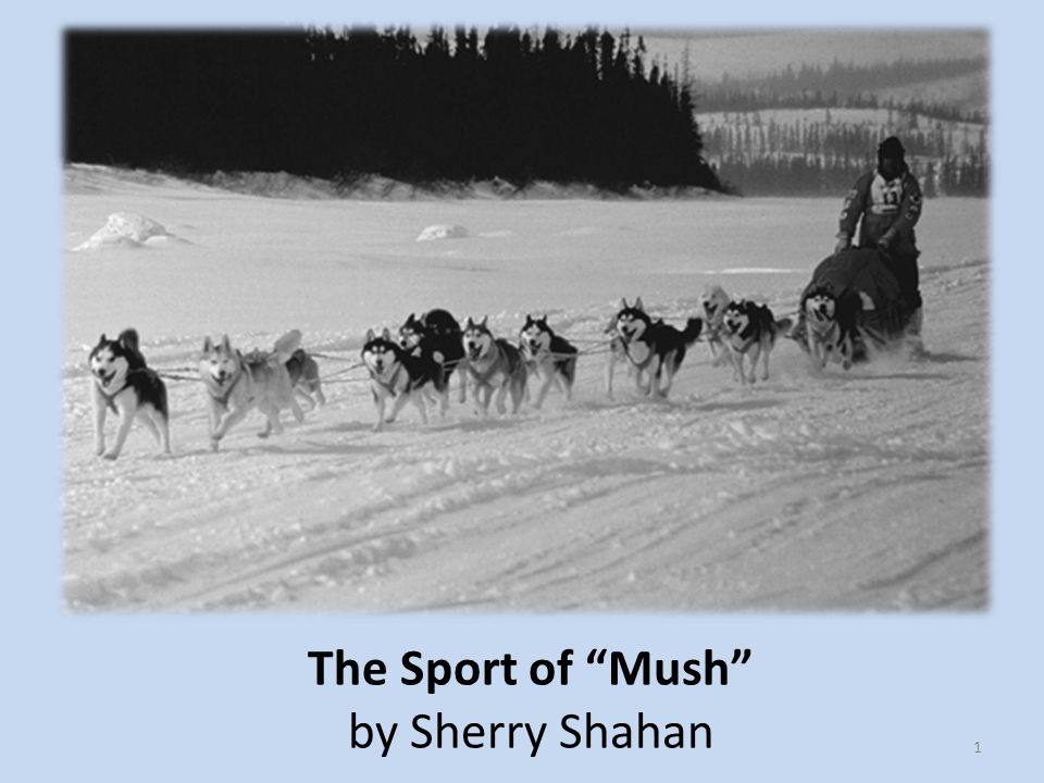 The Sport of Mush by Sherry Shahan