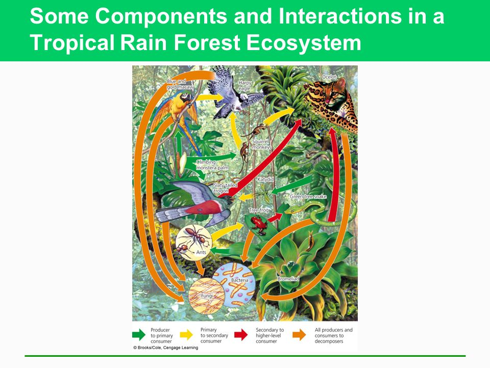 Some Components and Interactions in a Tropical Rain Forest Ecosystem