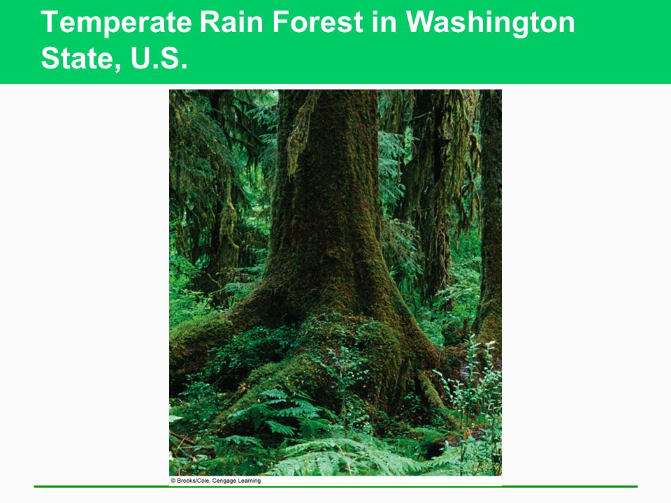 Temperate Rain Forest in Washington State, U.S.