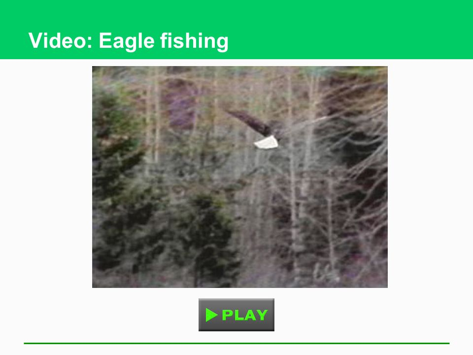 Video: Eagle fishing