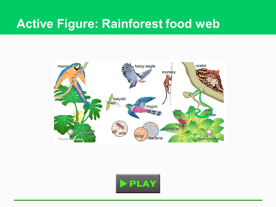 Active Figure: Rainforest food web