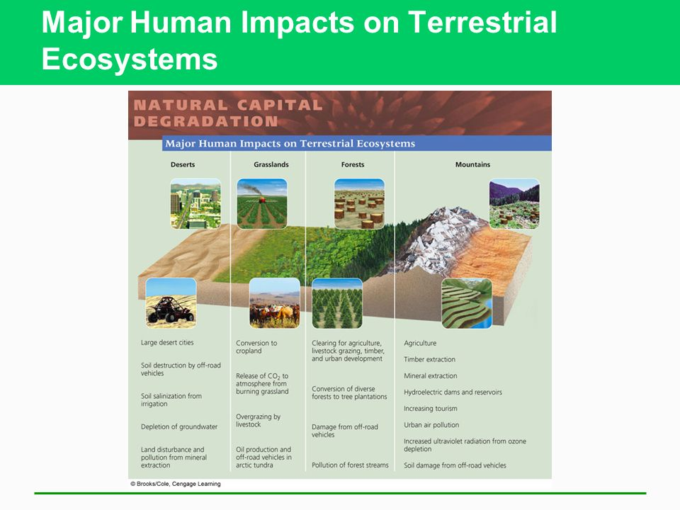 Major Human Impacts on Terrestrial Ecosystems