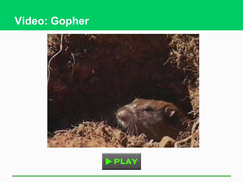 Video: Gopher