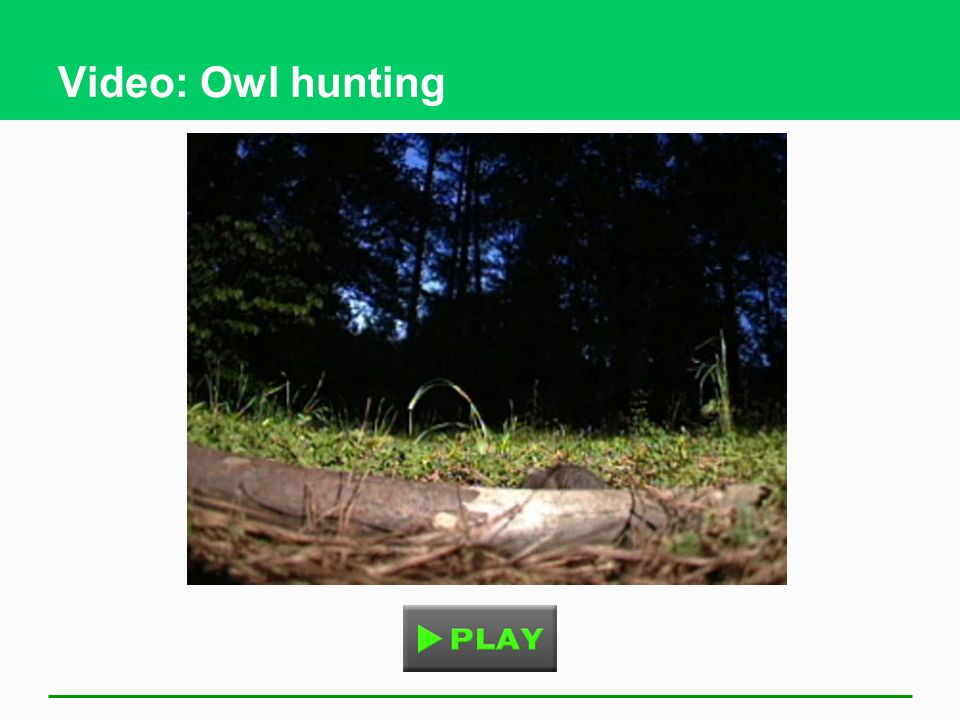 Video: Owl hunting