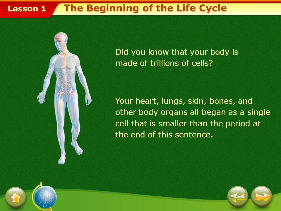 The Beginning of the Life Cycle