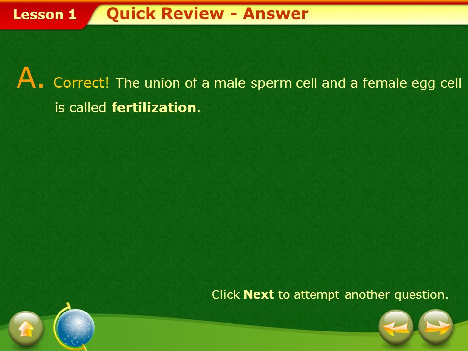 Quick Review - AnswerA. Correct! The union of a male sperm cell and a female egg cell is called fertilization.