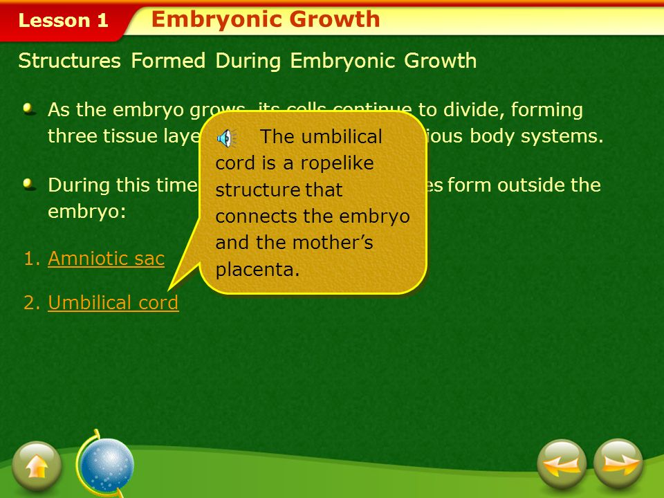 Embryonic Growth Structures Formed During Embryonic Growth