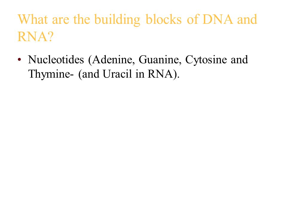 What are the building blocks of DNA and RNA