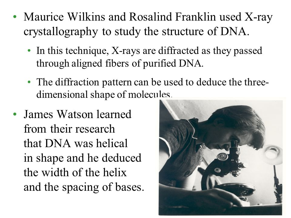 Maurice Wilkins and Rosalind Franklin used X-ray crystallography to study the structure of DNA.