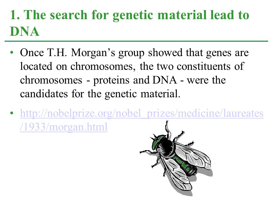 1. The search for genetic material lead to DNA