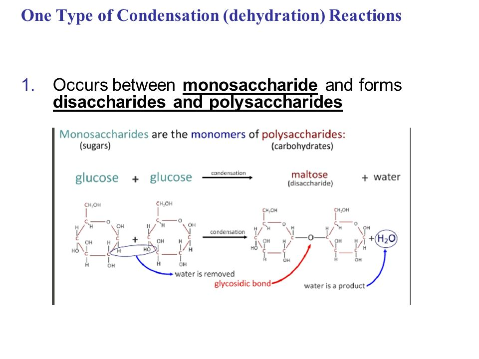 dehydration reactions and hydrolysis relationship counseling