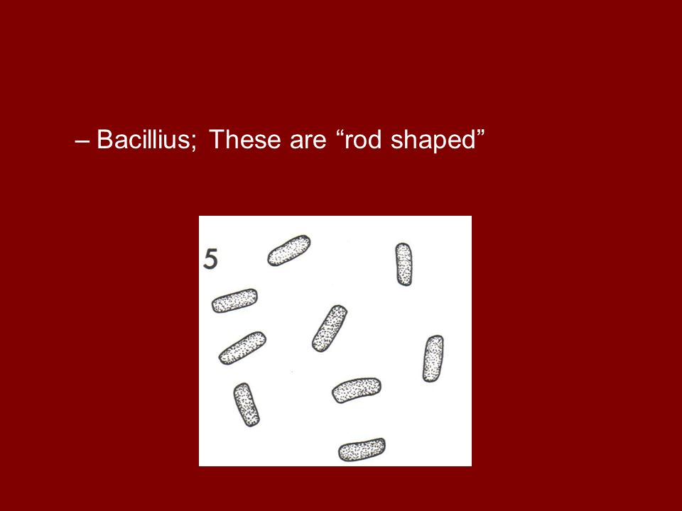 Bacillius; These are rod shaped