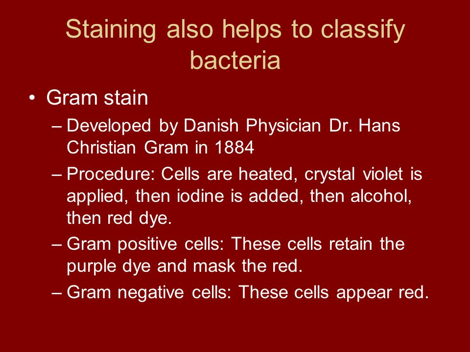 Staining also helps to classify bacteria