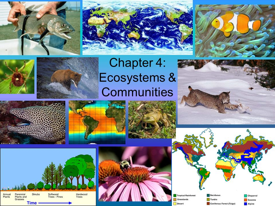 Chapter 4: Ecosystems & Communities