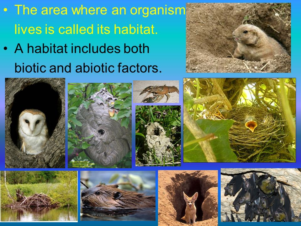 The area where an organism
